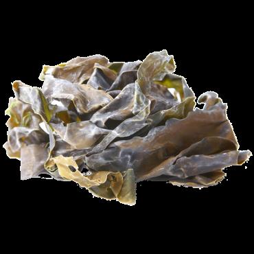 Kombu (Laminaria digitata) 25g
